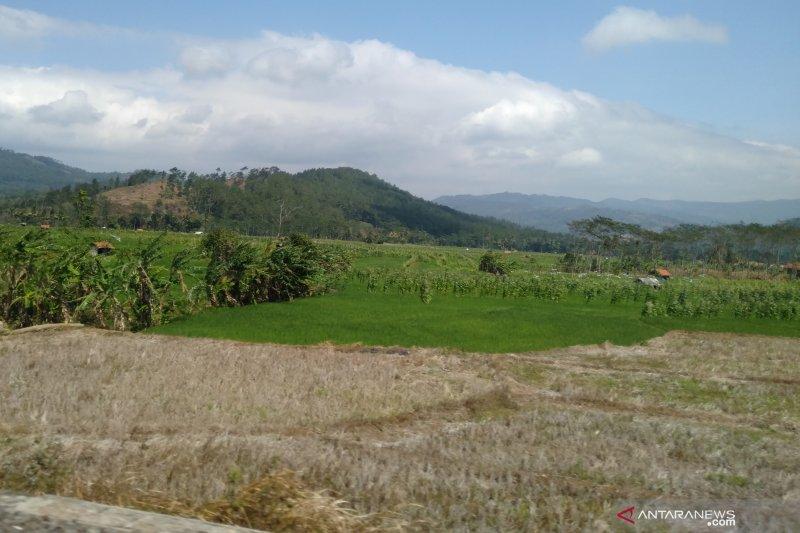 Dua bulan tanpa hujan, lebih 2.000 hektare sawah di Sumatera Selatan