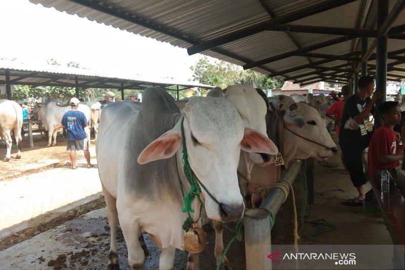Bantul menargetkan program Siwab jangkau 24 ribu sapi
