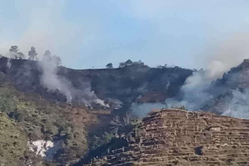 Hutan Gunung Pakuwojo Dieng terbakar
