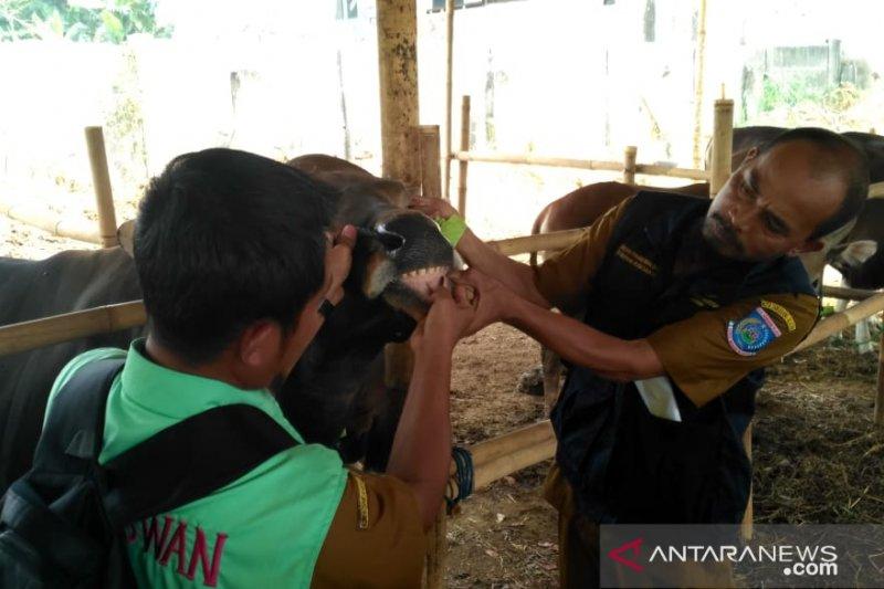 Cek kesehatan, hewan kurban di Tangerang Selatan disidak DKP3