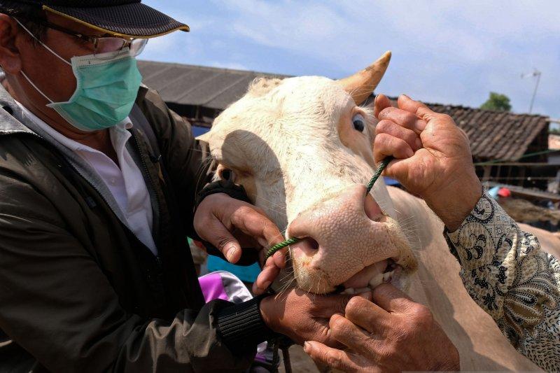 Distankan Pekanbaru turunkan tim ke kantong perdagangan hewan kurban