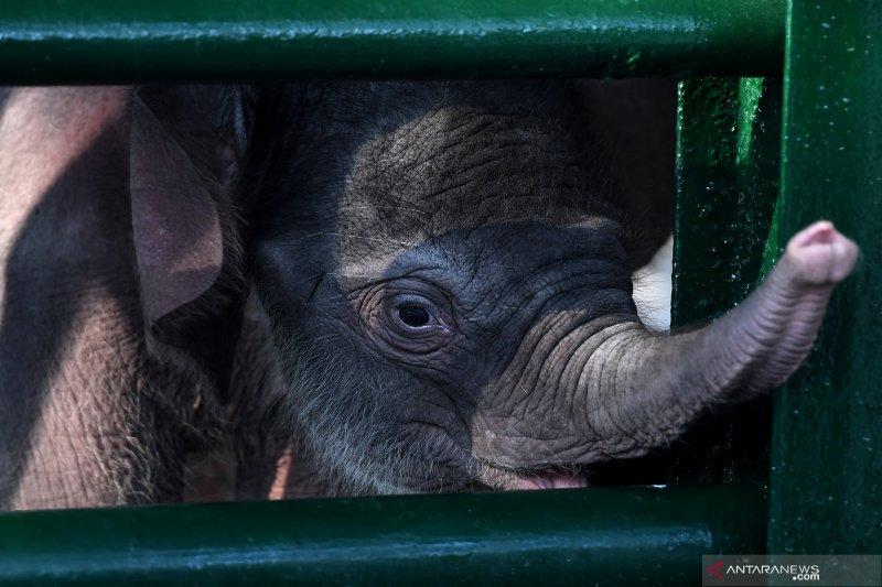 Penghuni baru Kebun Binatang Surabaya