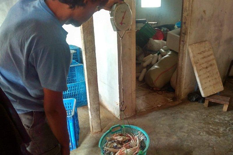 Harga rajungan di Lampung Timur stabil