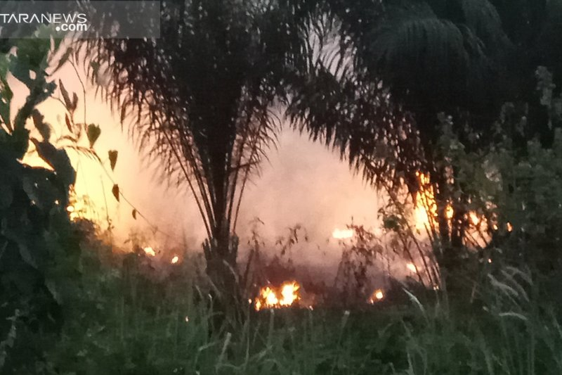 Warga keluhkan kebakaran hutan dan lahan Register 45 Mesuji Lampung
