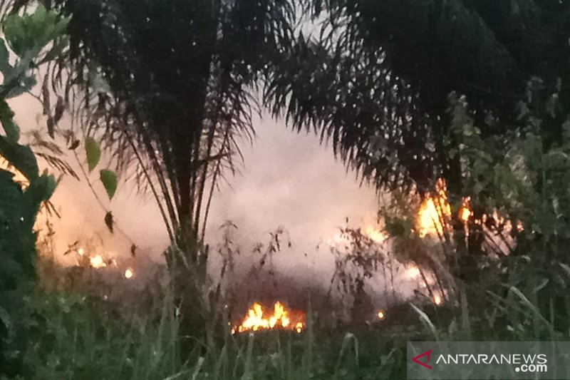 Kebakaran hutan di Register 45 Mesuji