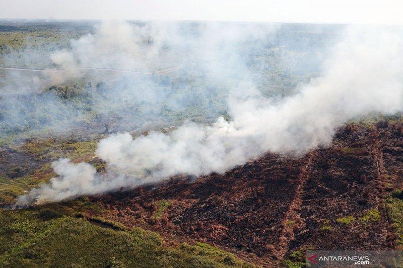 KLHK segel 10 lokasi kebakaran lahan di areal konsesi yang terbakar di Kalimantan Barat
