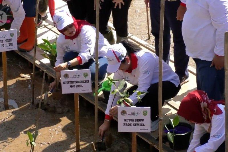 Kesadaran menanam mangrove mulai merebak di masyarakat