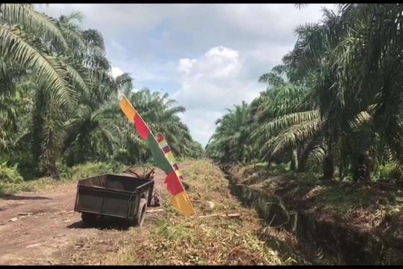 Pembasahan lahan gambut melalui sekat kanal