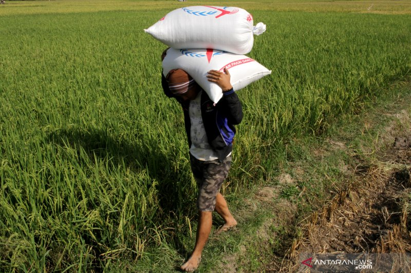 Kelompok lumbung kesulitan mengolah cadangan beras