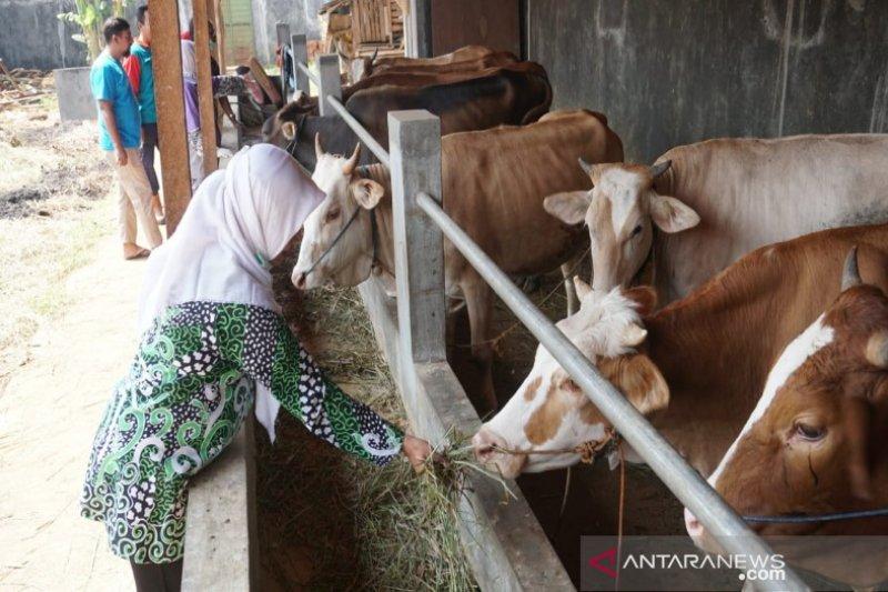 Antisipasi daging tak layak, Pekalongan intensif periksa hewan kurban