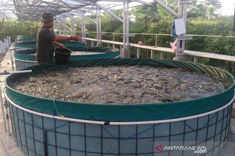 Produksi benih ikan lele di Kudus terkendala cuaca