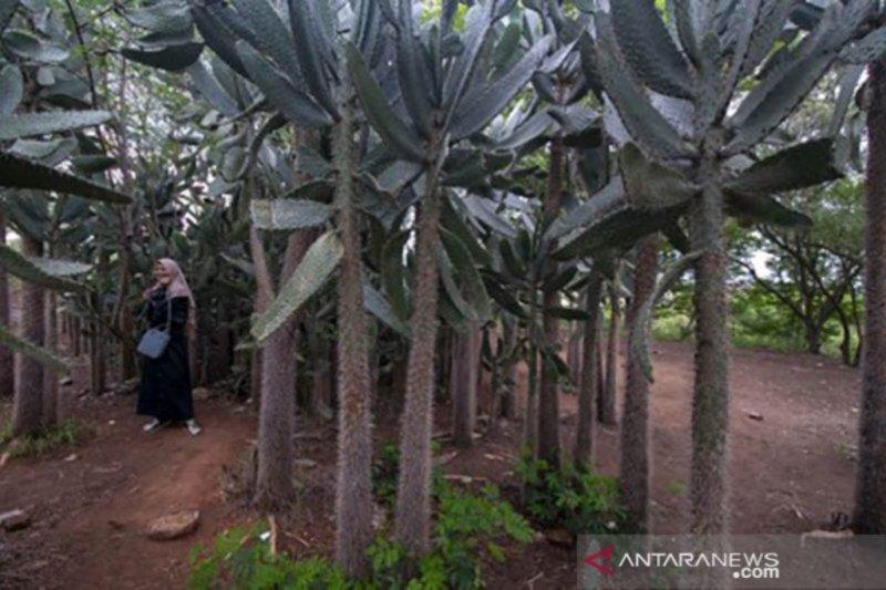 Kota Palu punya dua kampung wisata setelah dilanda gempa