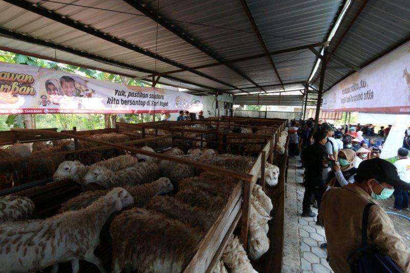 ACT akan mendistribusikan 1.000 hewan kurban di DIY