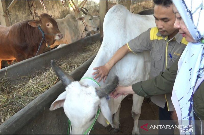Pemkot Sukabumi Perketat Penjualan Hewan Kurban