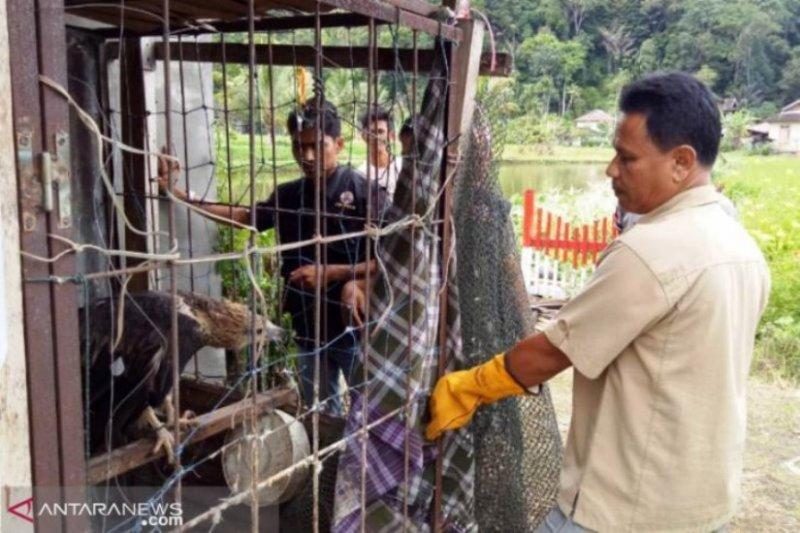 BKSDA terima penyerahan empat ekor satwa dilindungi dari warga Agam
