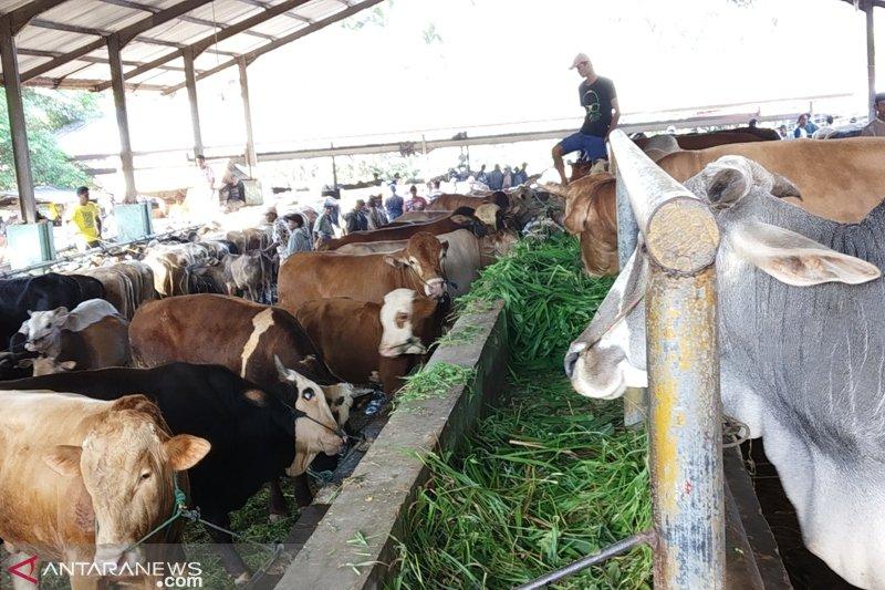Pemeriksaan kesehatan hewan kurban di Tanah Datar dari masjid hingga pasar