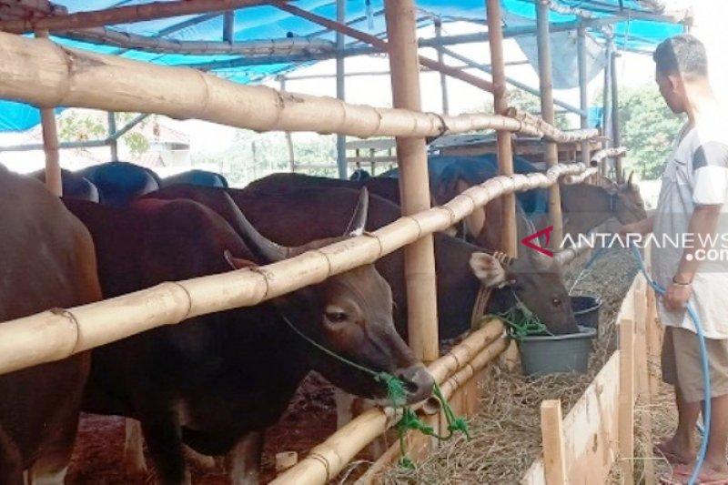Dinas Peternakan OKU pastikan hewan kurban layak konsumsi