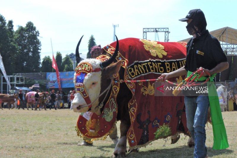 Ini kontes-kontes ternak di daerah