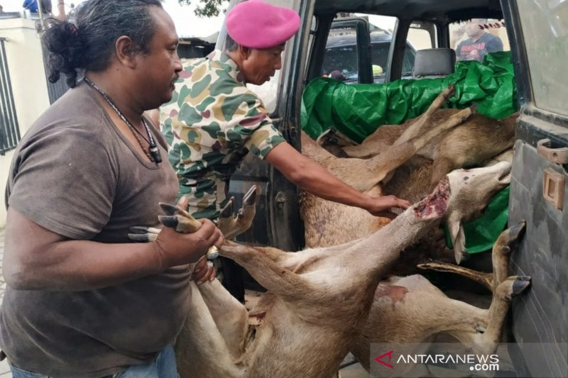 Lanal Mataram mengungkap kasus perburuan rusa di Sape