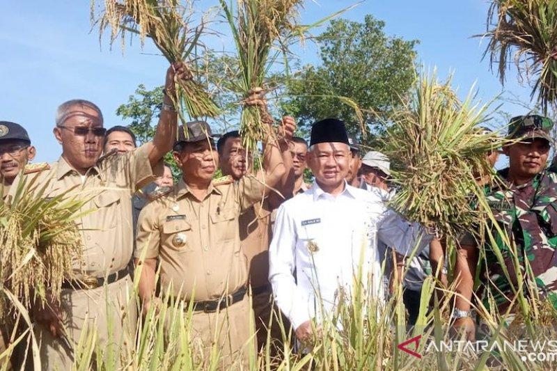 Kabupaten OKU Timur sukses kembangkan padi organik