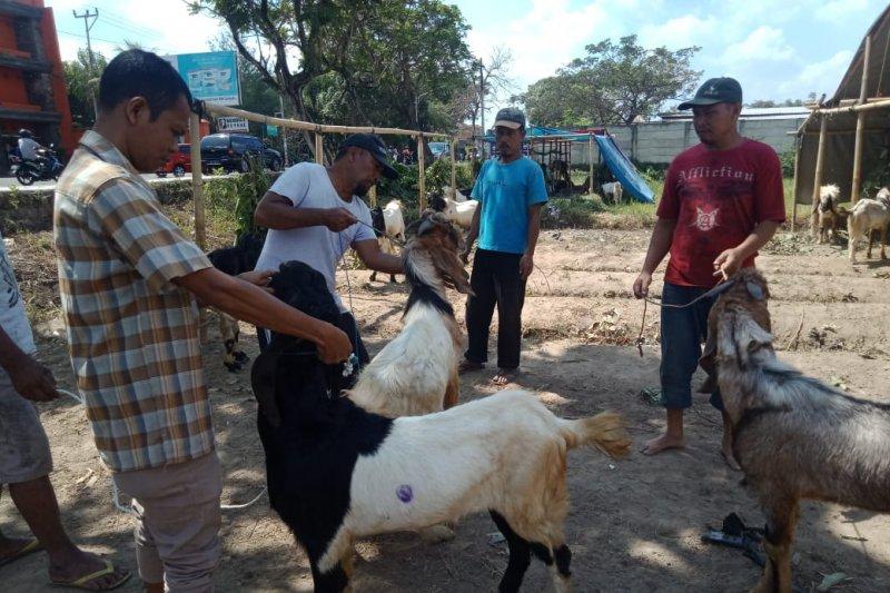 Pemkot Mataram menyiapkan puluhan hewan kurban