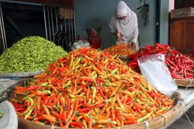 Harga cabai rawit di Singkawang tembus Rp90.000 per kg