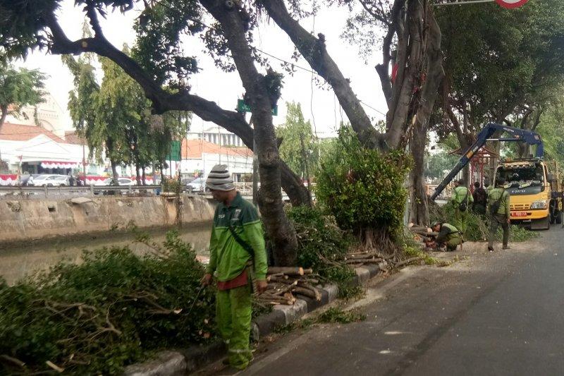 Wali Kota Jakpus ikut lomba dayung 17-an di Kali Pasar Baru