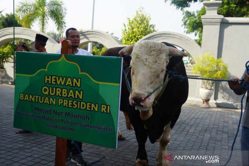 Presiden Jokowi sumbang dua ekor sapi kurban untuk DIY