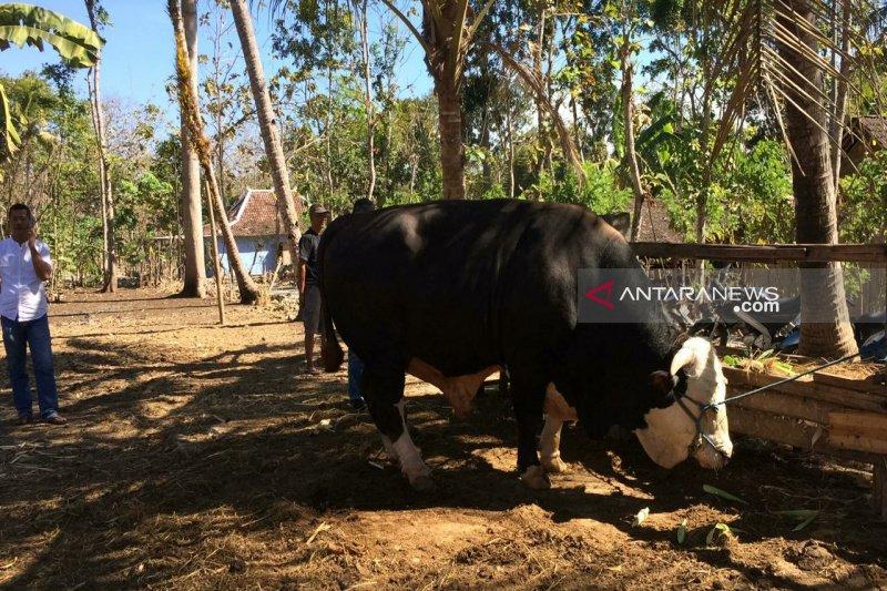 Warga Mulusan Gunung Kidul terima hewan kurban Presiden Jokowi