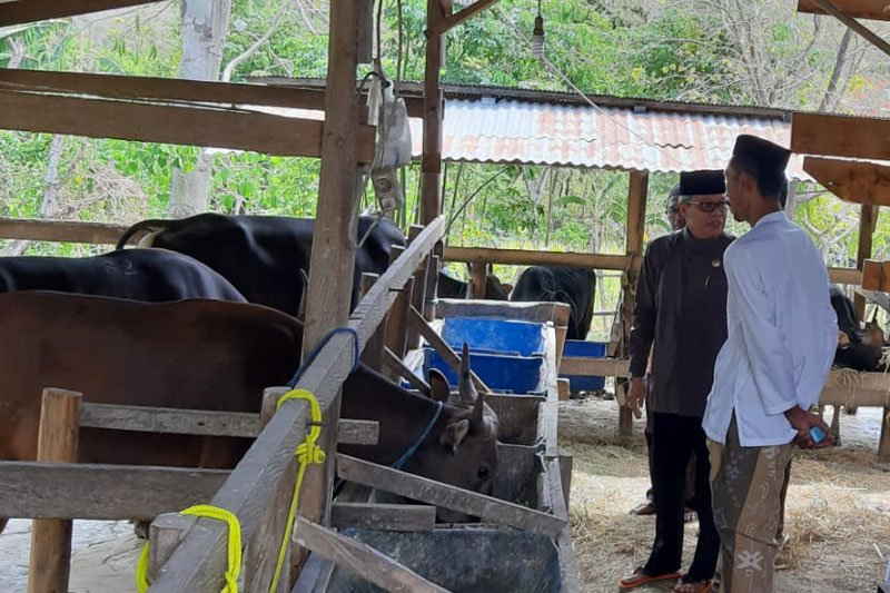 Wali Kota Parepare tinjau peternakan hewan kurban