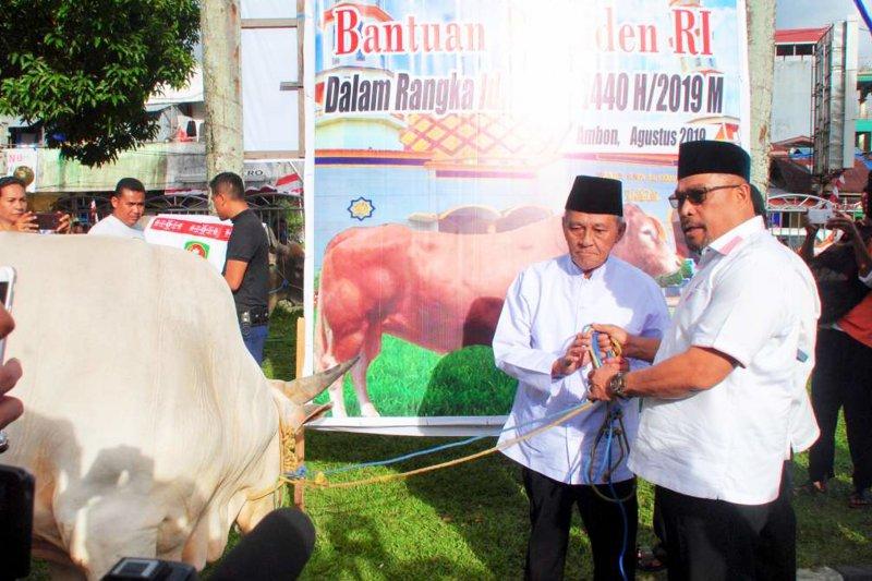 Gubernur Maluku serahkan sapi seberat 850 kg sumbangan Presiden