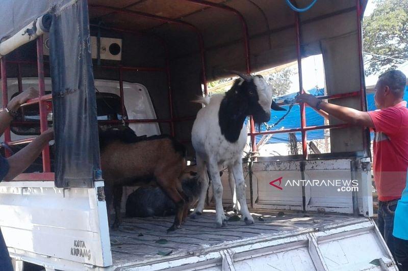 Pedagang hewan kurban menjamur