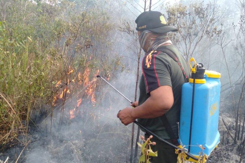 Hutan semak-semak Way Kambas sabtu siang terbakar