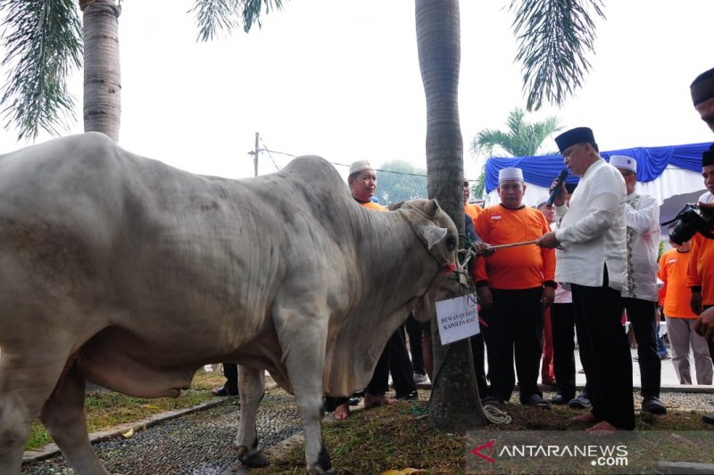 Polda Riau bagikan 1.150 kupon kurban