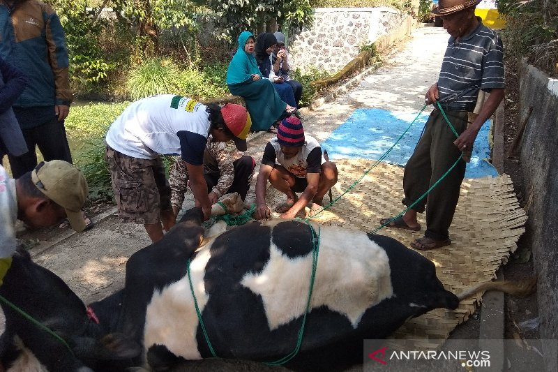 Jagal tertendang sapi di Cengkareng meninggal dunia adalah hoaks