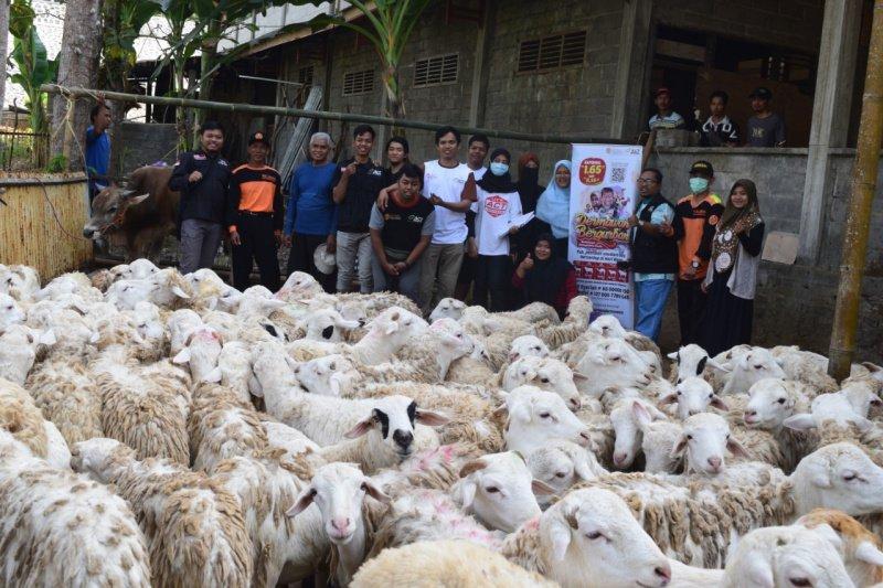 18+ Gambar penyembelihan hewan qurban kambing terbaru