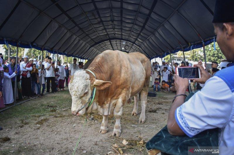 Peserta  kurban di Palembang meningkat