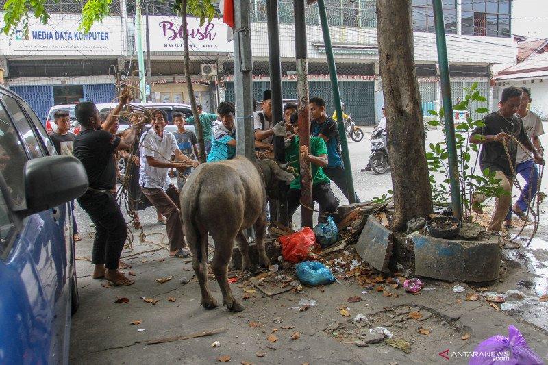 Pekanbaru sediakan sebelas ribu hewan kurban