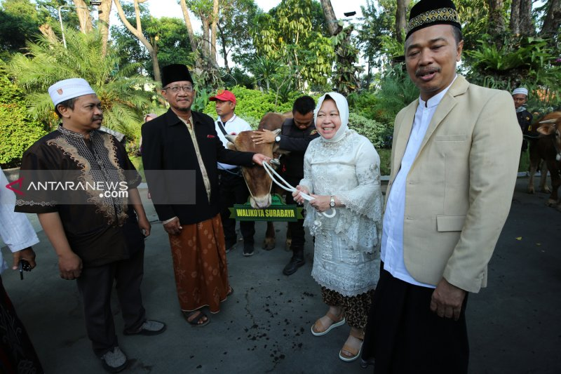 Belasan sapi diserahkan pemkot ke masjid di Surabaya