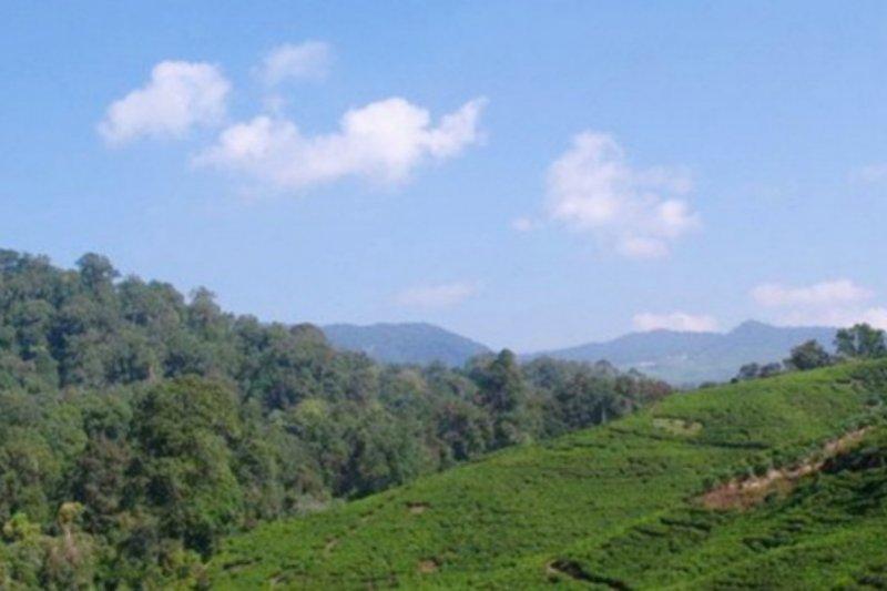Pemkab Bogor kenalkan destinasi wisata ke dunia lewat