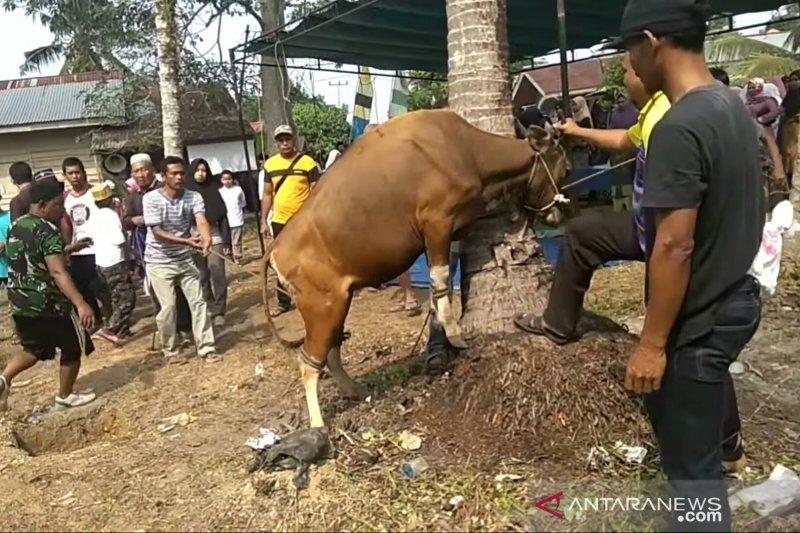 2.664 hewan kurban disembelih di Siak, meningkat 2,81 persen