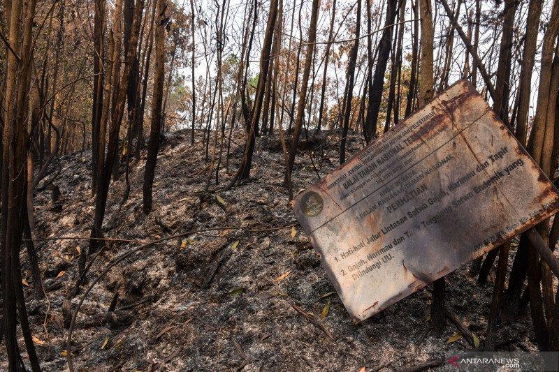 BNPB: Januari-Agustus 2019, kebakaran hutan capai 328.724 hektare