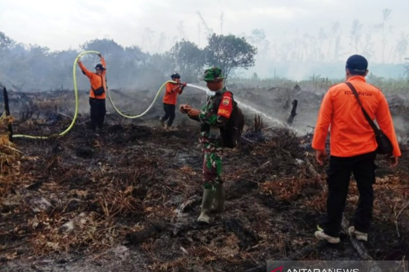 Sekitar 50 hektare hutan produksi di Pesisir Selatan terbakar