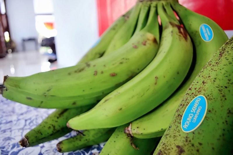 Pisang agung Lumajang masuk pasar Malaysia