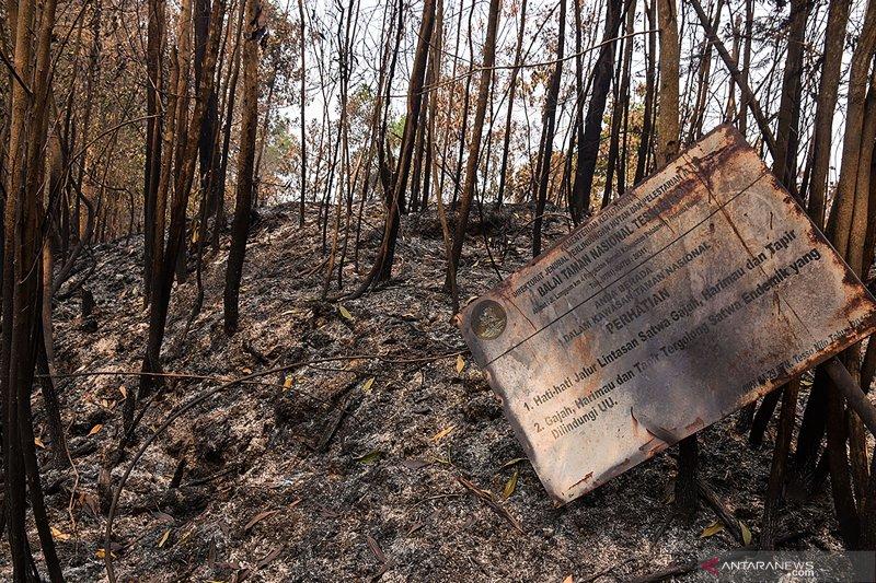 """Polisi tangkap tokoh adat """"Batin"""" perambah Taman Nasional Tesso Nilo, begini penjelasannya"""