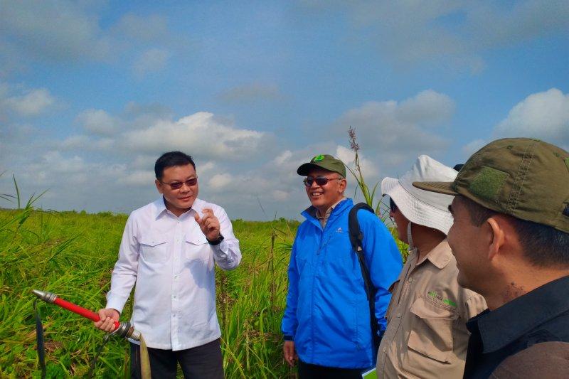 Kepala BRG tinjau pemulihan hutan SM Padang Sugihan