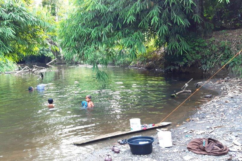 """""""Herbal ajaib"""" dari rimba Kalimantan"""