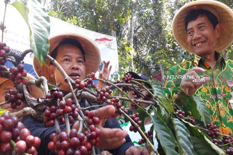 Peluang pengembangan industri pengolahan kopi masih besar