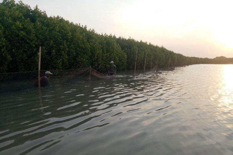 Pertamina tanam 90.000 mangrove, Mantan Menteri BUMN beri apresiasi