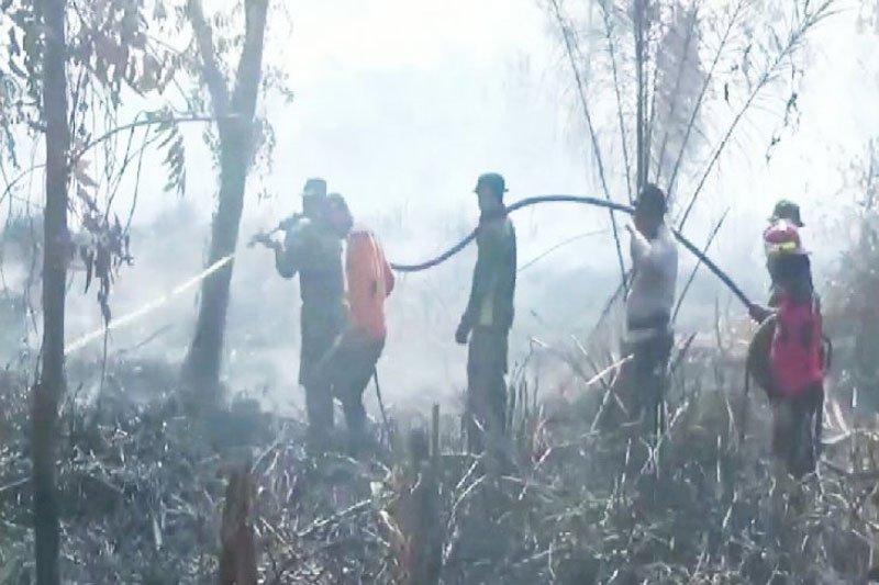Satwa liar masuk ke permukiman akibat terdesak  kebakaran lahan